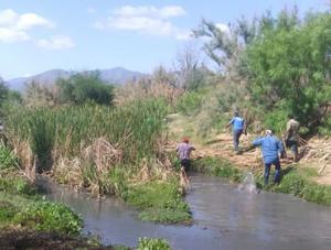 Ecología atiende reportes de la ciudadanía