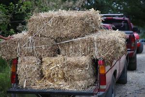 Precios altos de pacas hacen imposible alimentar al ganado
