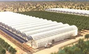 Pronostica Agricultura crecimiento de 15% en producción para 2021