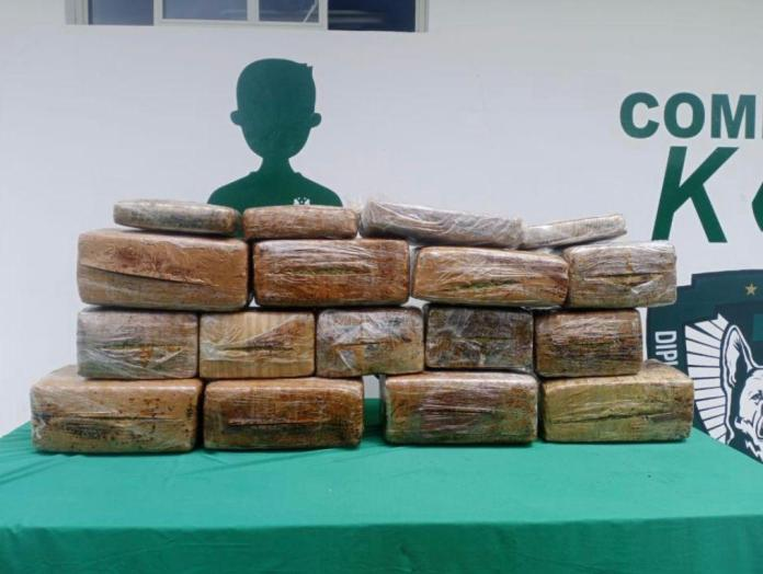 Agentes caninos detectan 130 kilos de marihuana en Xalapa