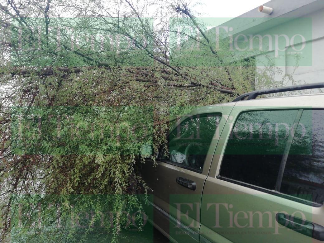 Lluvia sorprende a Monclova; Bomberos atienden reportes de árboles caídos