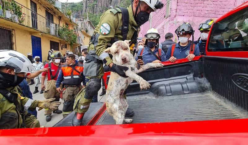 Milagro en el Cerro del Chiquihuite: rescatan con vida a perrita sepultada