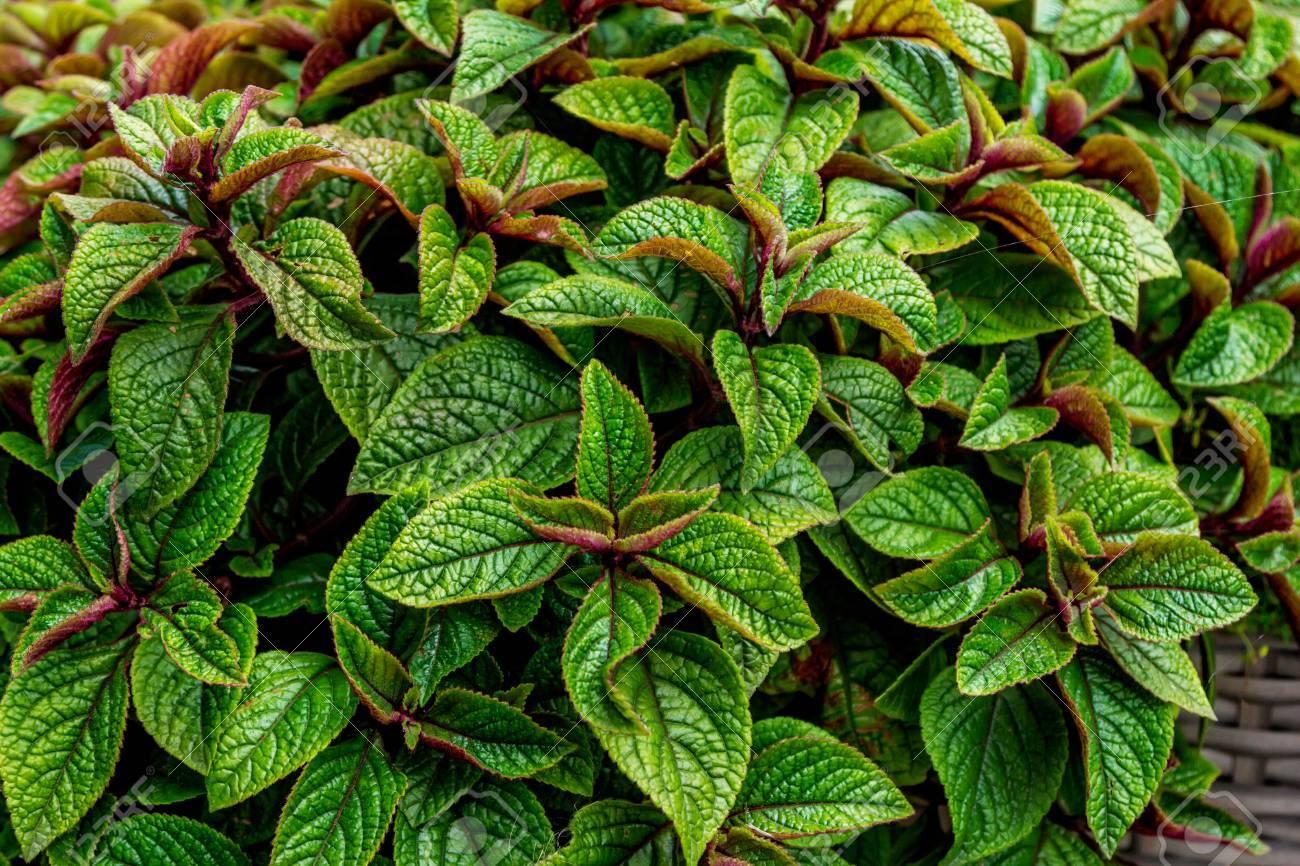 3 plantas colgantes perfectas para tu terraza