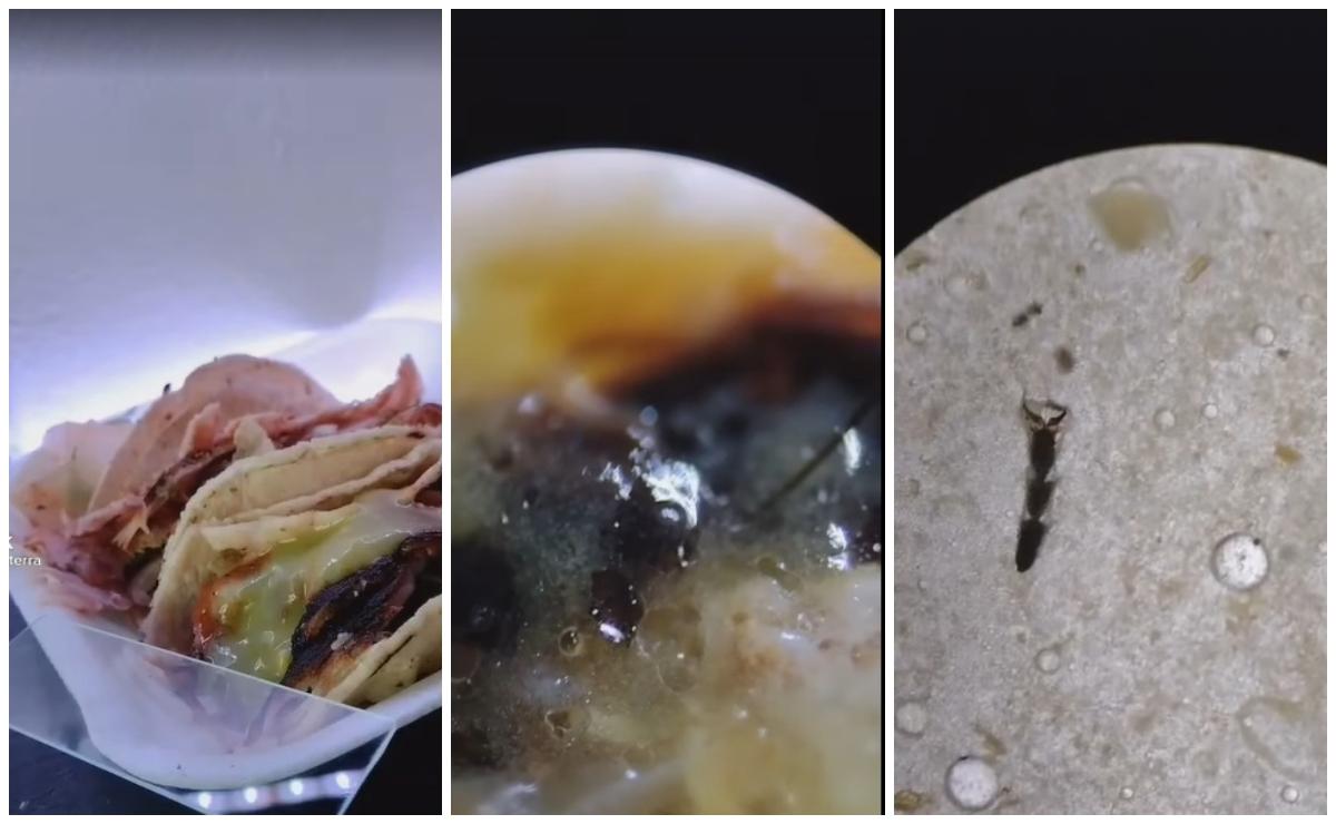 Miran con microscopio taco callejero y encuentran otros ingredientes
