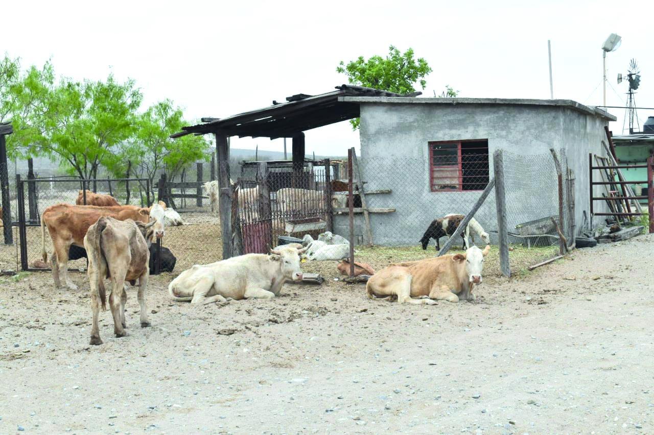 El gobierno federal mantiene abandonado el campo de Castaños