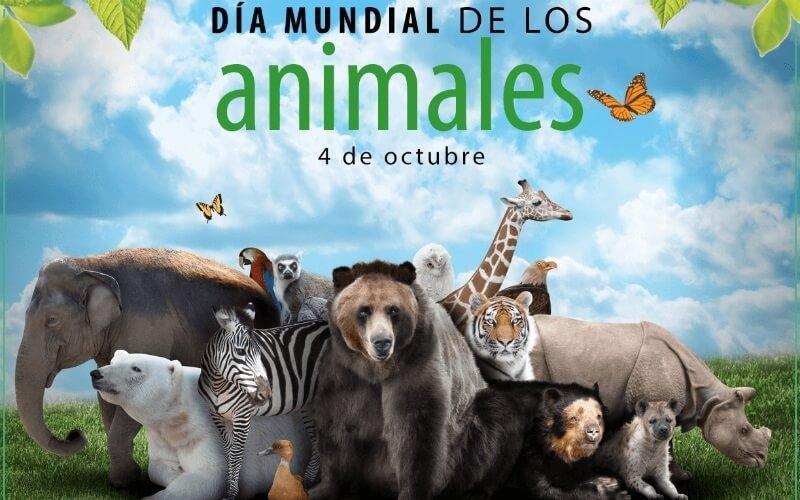 Día Mundial de los Animales ¿por qué se celebra el 4 de octubre?
