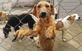 Al alza la tortura de animales en la Región Carbonífera