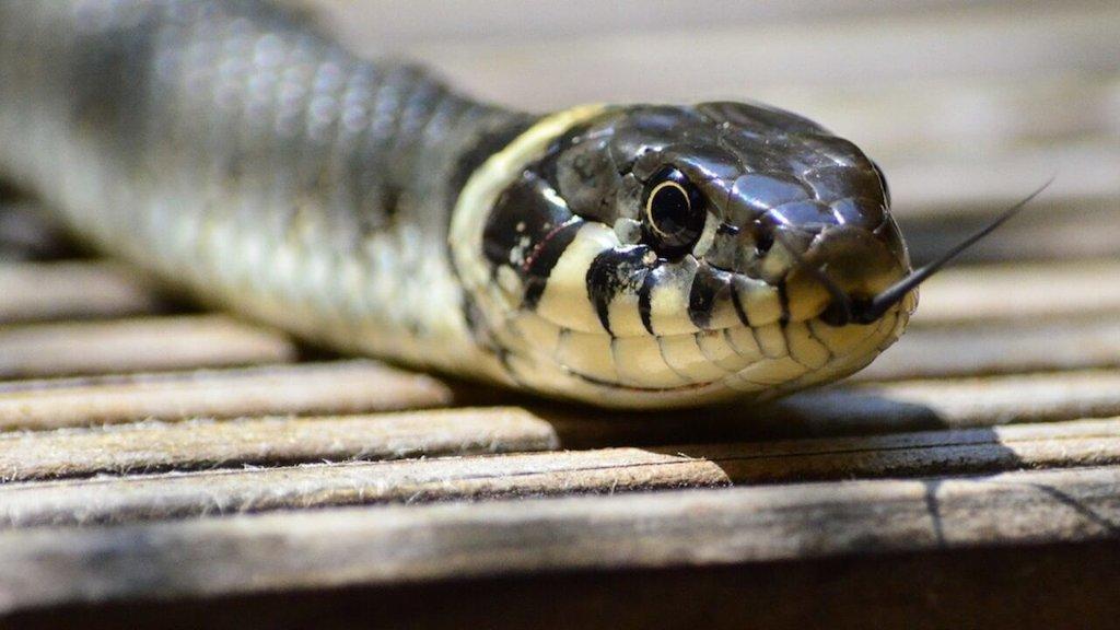 El Ecoparque de Monclova prepara una exhibición de serpientes