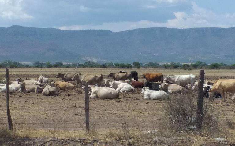 En Texas detectan becerros de Durango con tuberculosis