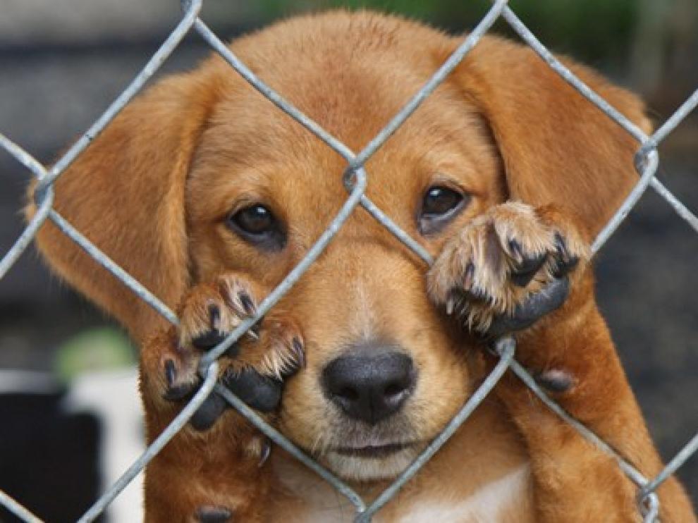 Rescatan a 14 perros maltratados tras operativo en colonia Obrera