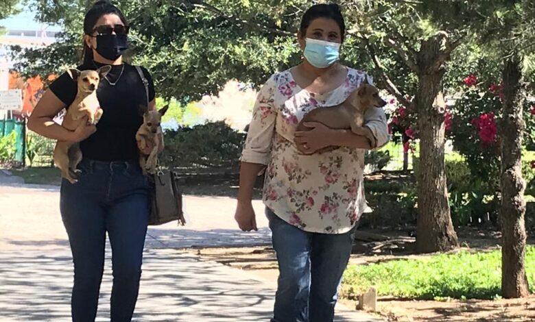 Salud Pública de Torreón busca bajar cifra de perros callejeros