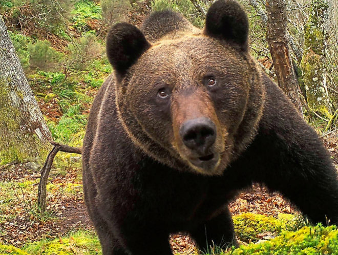 Autoridades de Saltillo alertan sobre el avistamiento de osos