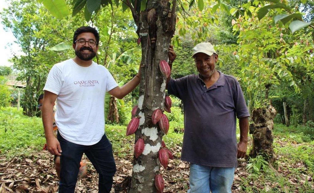 Anuncian Escuelita del Cacao para impulsar a productores en Oaxaca