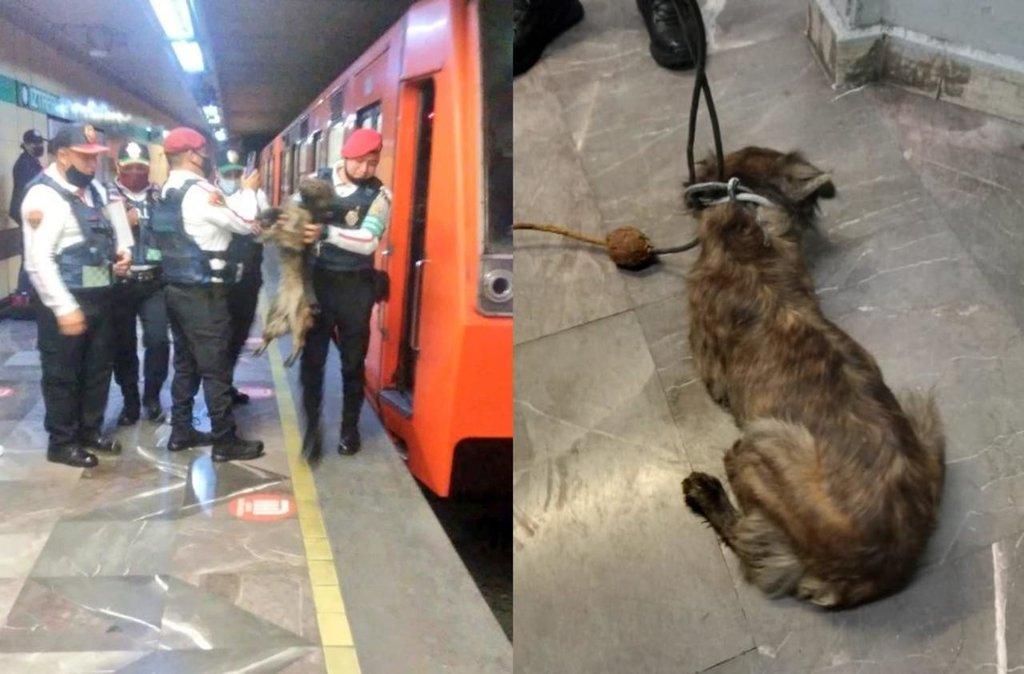 Por rescate de perro, cortan corriente en la Línea 8 del Metro CDMX