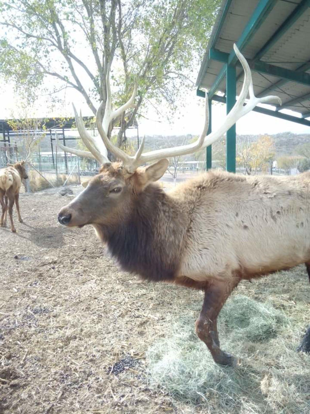 GALERÍA: Abren puertas del Ecoparque Monclova