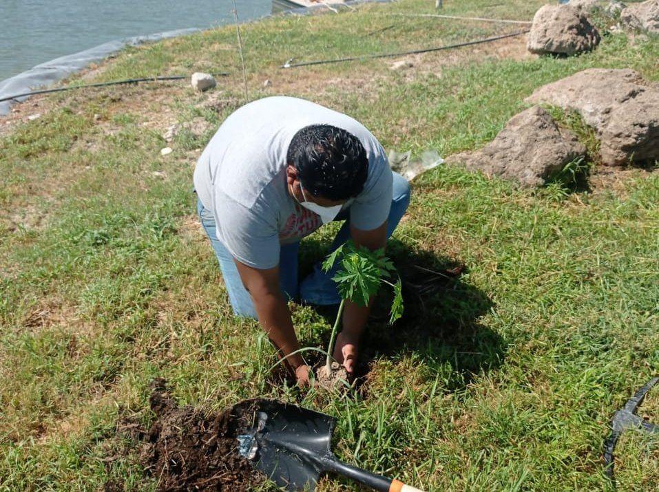 Reforestación en Ecoparque de Monclova