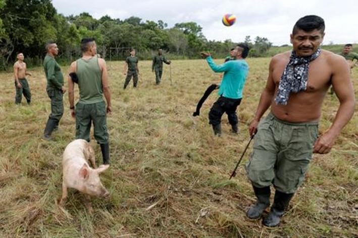 Guerrilla FARC reporta 5.765 miembros armados en Colombia